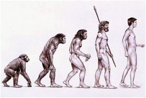 Schéma de l'évolution des primates